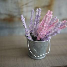 Fleur Lupine